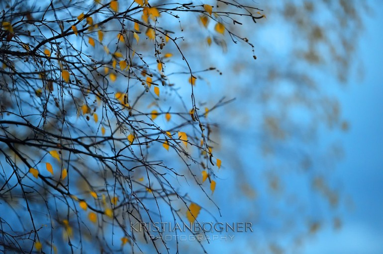 The warm leaves caught my eye amongst the cool evening light during a National Geographic photo walk with Jimmy Chin.